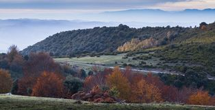 Autumn colors on tree foliage at mountain plateau. The mountain plateau of Pla de la Calma at the Montseny nature reserve in northeastern Catalonia shows a royalty free stock photo