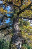 Autumn colors in a tree stock image