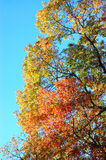 Autumn colors. Royalty Free Stock Images