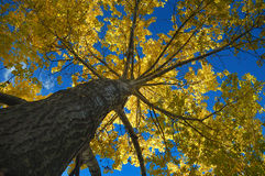 Autumn colors in trees Royalty Free Stock Images