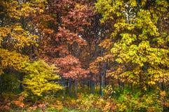 Autumn Colors Trees en el parque Fotos de archivo