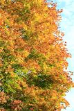 Autumn colors. Trees in the fall. Yellow foliage. The beauty of autumn. stock photo