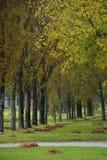 Autumn Colors Trees Palic Subotica Serbien Royaltyfria Foton