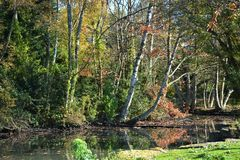 Autumn Colors Trees Park Poole Dorset Engeland royalty-vrije stock foto's