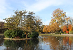 Autumn colors on trees in the Regent's Park London Stock Image