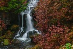 Autumn Colors- und Ryuzu-Wasserfall in Nikko Japan Lizenzfreie Stockfotos