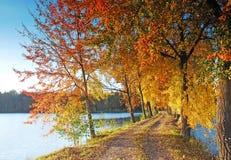 Autumn colors under blue sky Stock Photography