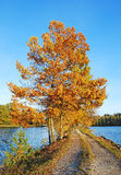 Autumn colors under blue sky Royalty Free Stock Photo