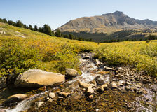 Autumn Colors, vallée de pin, région sauvage collégiale de crêtes, Pike Image stock