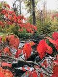 Autumn Colors vid strömmen arkivbild