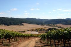 Autumn Colors in Vineyard. Grassy road winding down through a vineyard on a beautiful autumn day Royalty Free Stock Photos
