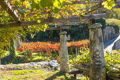 Autumn colors in the vineyard, Italy Stock Photos
