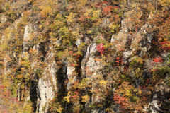 Autumn Colors von Naruko-Schlucht in Japan stockbild