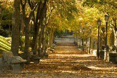 Autumn colors. Autumn walk between sunset colors royalty free stock images