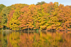Autumn colors water reflection. Autumn colored trees reflection on a lake Royalty Free Stock Photography