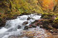Autumn colors of a waterfall. In Transylvania Royalty Free Stock Photos