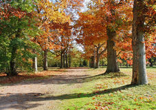 Autumn Colors in Windsor Great Park Stock Photography