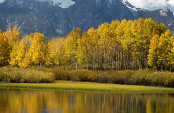 Autumn colors in Wyoming Royalty Free Stock Photos