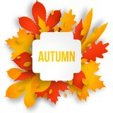 Autumn colotful background with leaves. Royalty Free Stock Photo