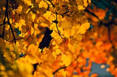 Autumn Colour royalty-vrije stock foto's