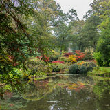 Autumn Colour. Colours of a Japanese style garden in autumn royalty free stock images