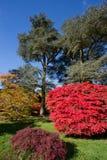 Autumn Colour Stock Photos