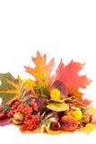 Autumn colour Stock Photography