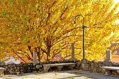 Autumn Colour Immagini Stock