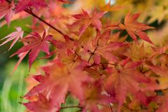 Autumn Colour Royaltyfria Foton