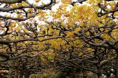 Autumn Colour Arkivbild