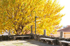 Autumn colour Royalty Free Stock Photos
