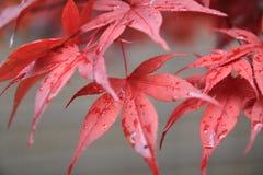 Autumn colour Stock Images