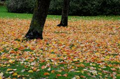 AUTUMN COLOUR LEAVES AND PLANTS Stock Images