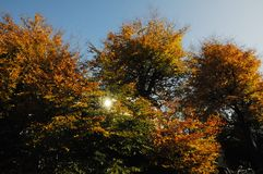 AUTUMN COLOUR LEAVES ON SUNNY DAY COPENHAGEN. Copenhagen/Denmark 02..November 2018.. Autumn colour leaves on sunny day in danish capital Copenhagen Denmark royalty free stock images