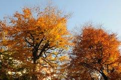 AUTUMN COLOUR LEAVES ON SUNNY DAY COPENHAGEN. Copenhagen/Denmark 06..November 2018.. Autumn colour leaves on sunny day in danish capital Copenhagen Denmark royalty free stock photos