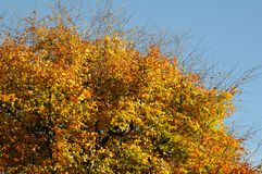 AUTUMN COLOUR LEAVES ON SUNNY DAY COPENHAGEN. Copenhagen/Denmark 26..October 2018.. Autumn colour leaves on sunny day in danish capital Copenhagen Denmark. Photo stock images