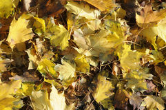AUTUMN COLOUR Royalty Free Stock Photography