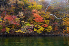 Autumn colour trees along the river. Of nikko Stock Images