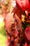 Autumn Coloured Leaves Background. Macro photography royalty free stock photo