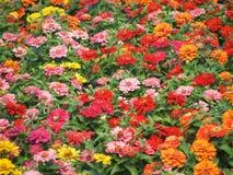 Autumn coloured little flowers Stock Photo