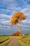 Autumn coloured tree Stock Image