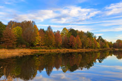 Autumn coloured trees at the lake Royalty Free Stock Photography