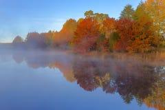 Autumn coloured trees Stock Photo