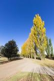 Autumn coloured trees Stock Photography