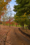Autumn coloured trees Royalty Free Stock Images
