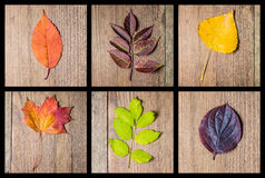 Autumn colourful leaves background Stock Photos