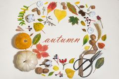 Autumn Colourful Leaves A In Circle Frame