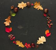 Autumn colourful leaves in circle frame isolated on white