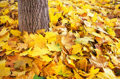 Autumn colourful leaves on the ground and tree trunk. Royalty Free Stock Photography