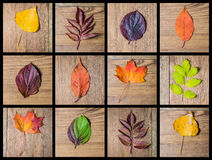 Autumn colourful leaves Stock Photo